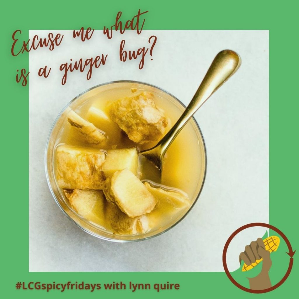 Spicy Fridays with Lynn Quire: Ginger Bug Probiotic Drink image